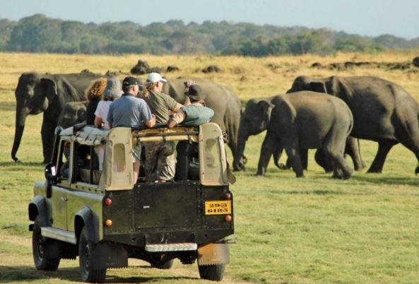 A Jeep Safari In Yala National Park