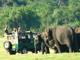 Animal Encounter Udawalawe Wildlife Safari