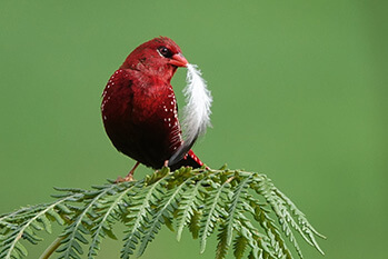 Bird watching in Sigiriya