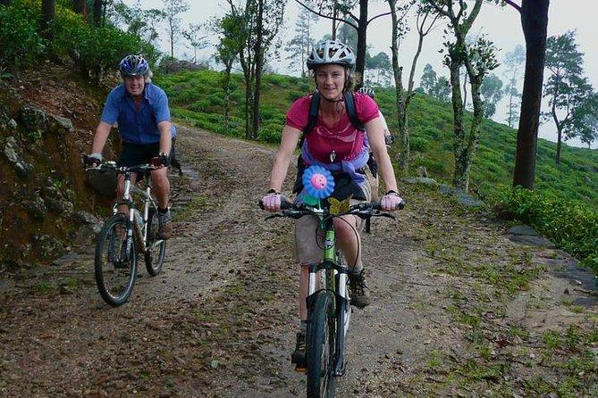 Cycling in Hanthana Tea Plantation