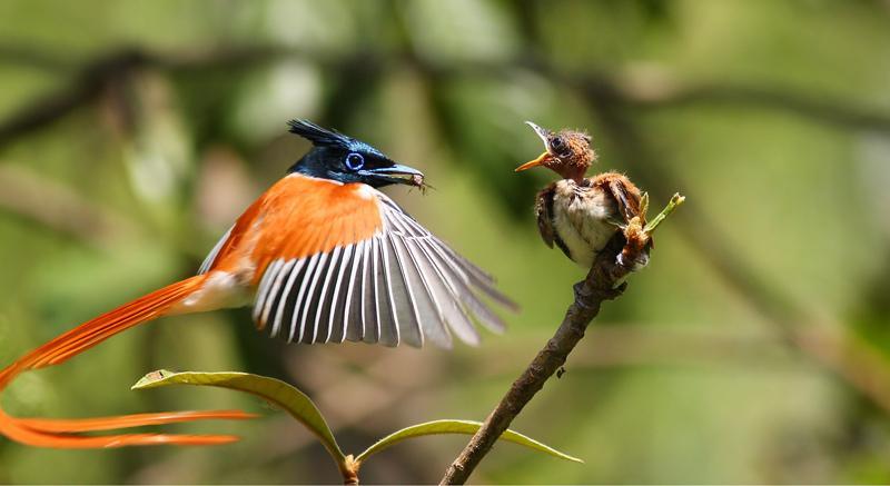Trekking and Bird watching in Kanneliya Rain Forest