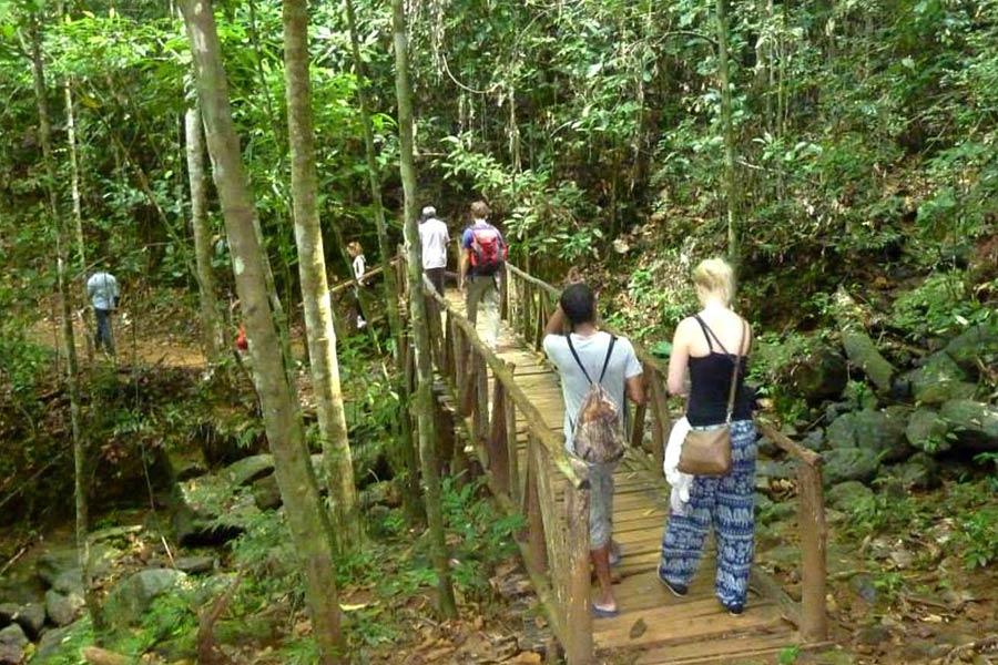 Nature Tour in Kanneliya Rainforest