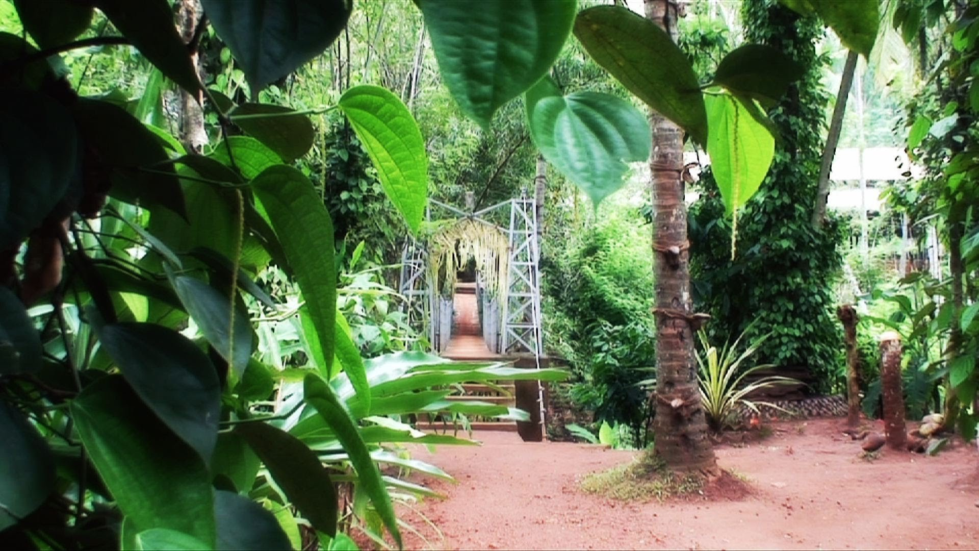 A visit to a Spice Garden in Matale