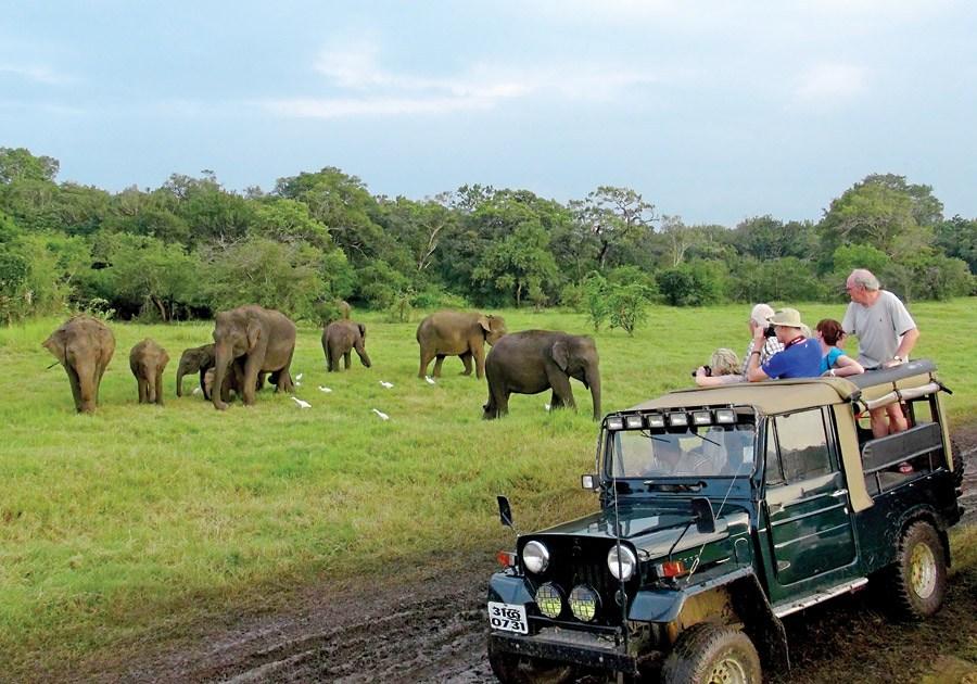 4×4 Jeep Safari at Minneriya National Park