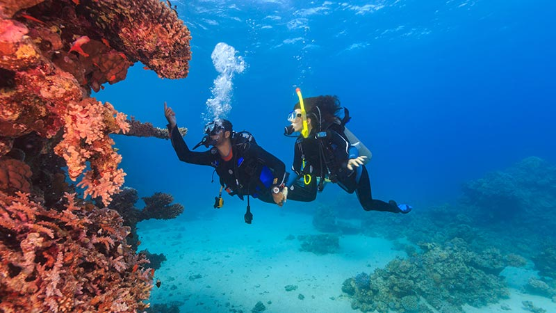 Snorkelling at Negombo
