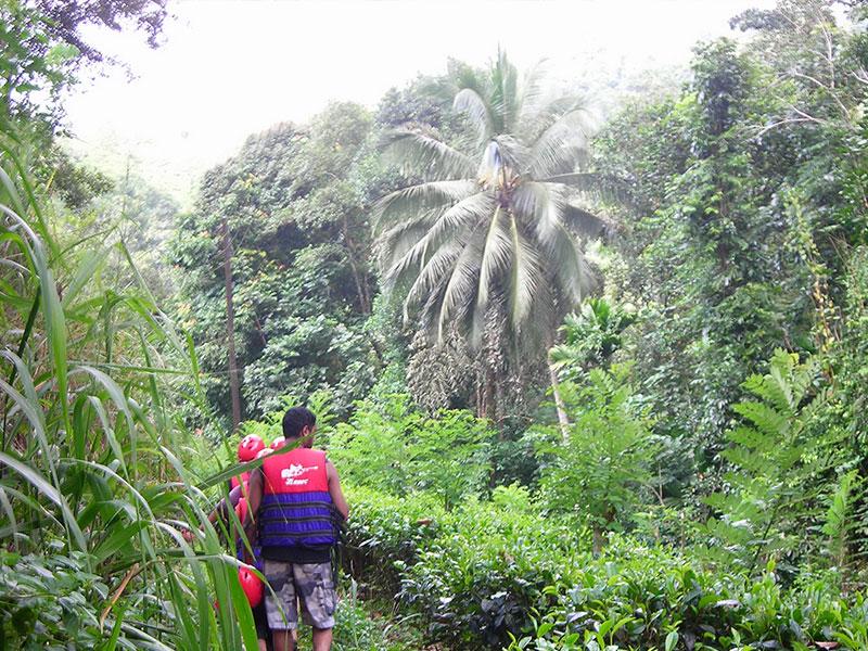 Jungle Trekking in Kithulgala