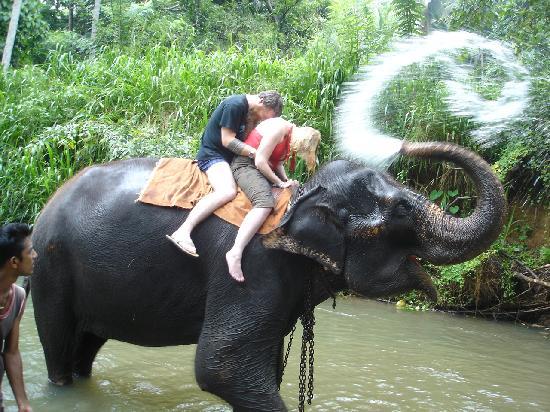 A Visit To The Millennium Elephant Foundation