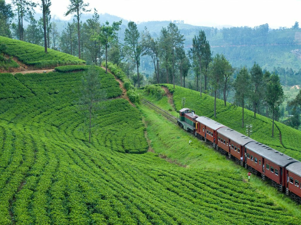 A Train Ride from Kandy to the Tea Country